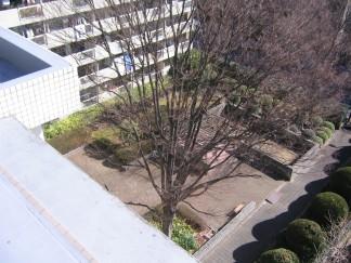 L型の建物から臨む中庭シンボルツリー